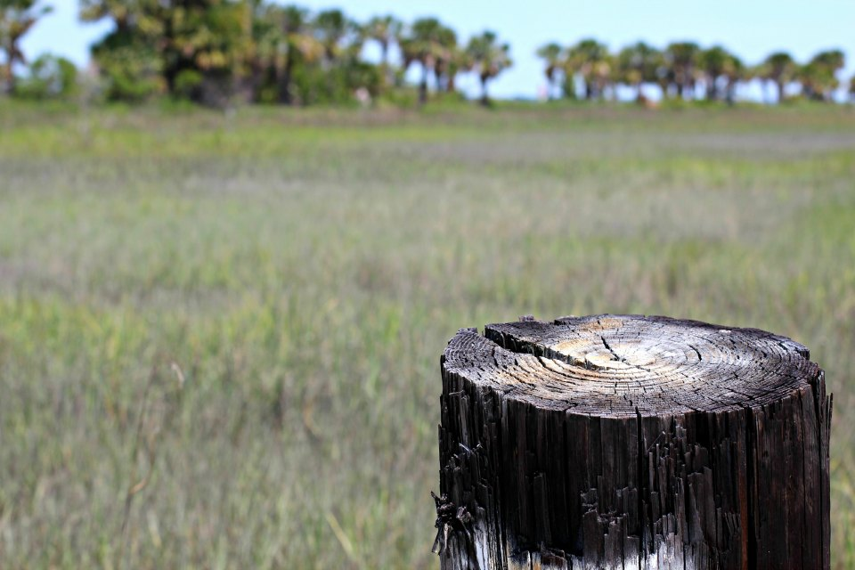Tree in Savannah Field